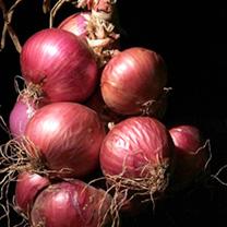 Onion Plants - Kamal