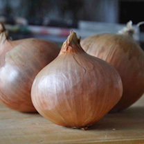 Onion Sets - Rose de Roscoff
