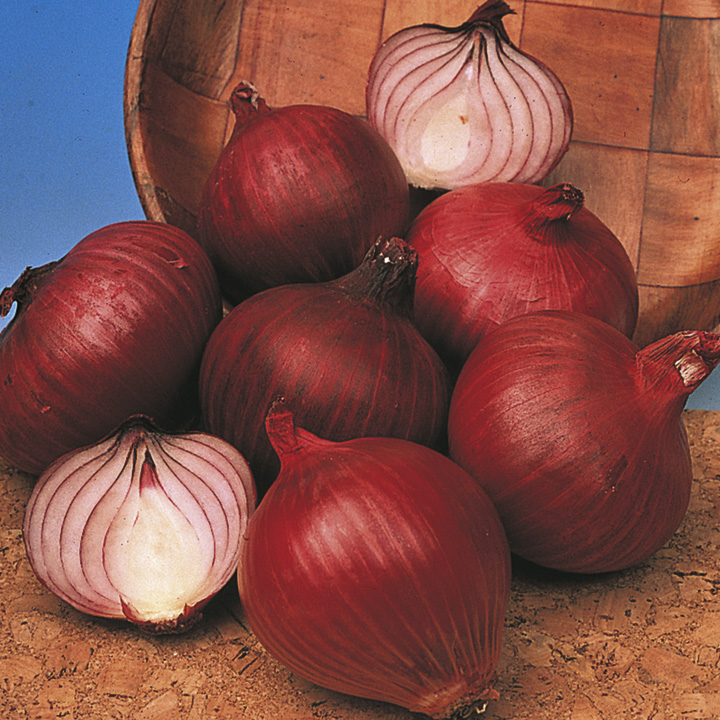 Onion Sets - Red Winter