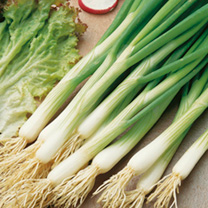 Onion (Salad) White Lisbon - Winter Hardy Seeds