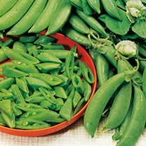 With a very sweet flavour, this round podded mangetout type pea will add a delicious flavour to your dinner plate. RHS Award of Garden Merit winner. H