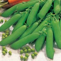 Pea Seeds - Little Marvel