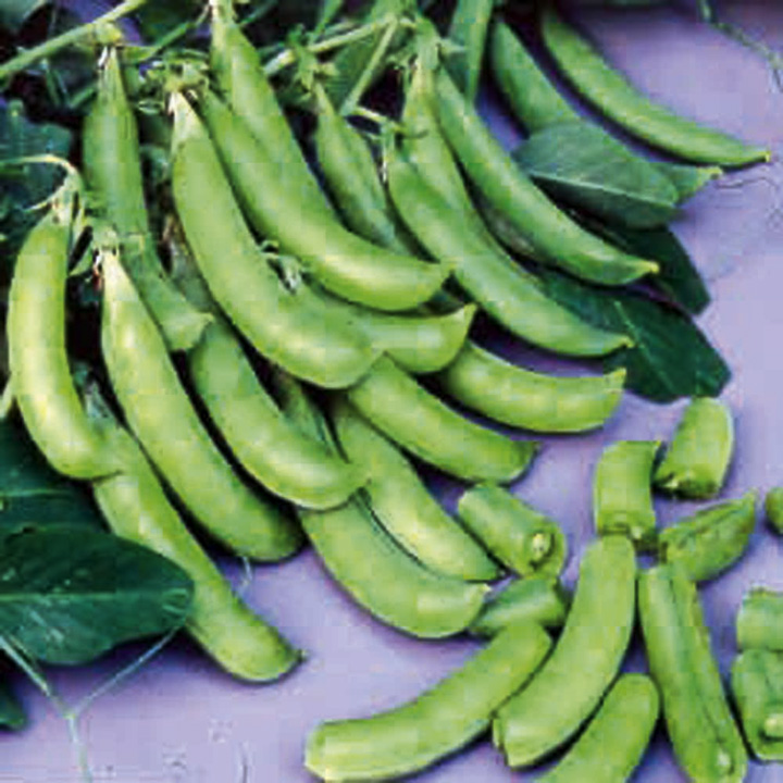 Pea Plants - Cascadia (Sugar Snap)