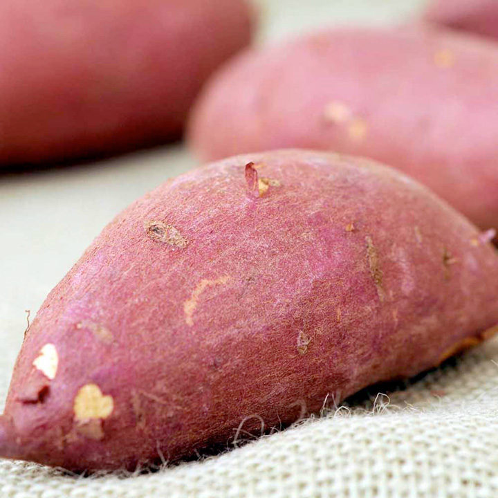 Sweet Potato Plants - Burgundy