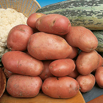 Seed Potatoes - Desiree 5kg