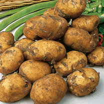 Seed Potatoes - Maris Peer Yellow
