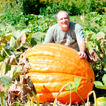 This is the really big one, regularly producing monsters up to and over 300kg. If you want to win the local pumpkin growing competition or just grow a