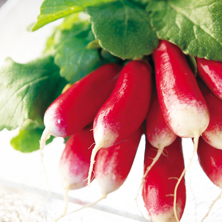 Radish Seeds - French Breakfast 3