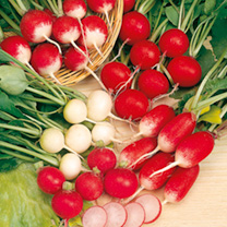 Radish Seeds - Rainbow Mix