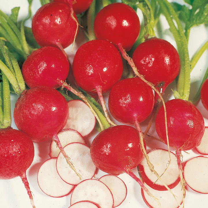 Radish Seeds Information Radish Seeds Scarlet