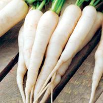 Radish Seeds - Long Scarlet & Long White Icicle