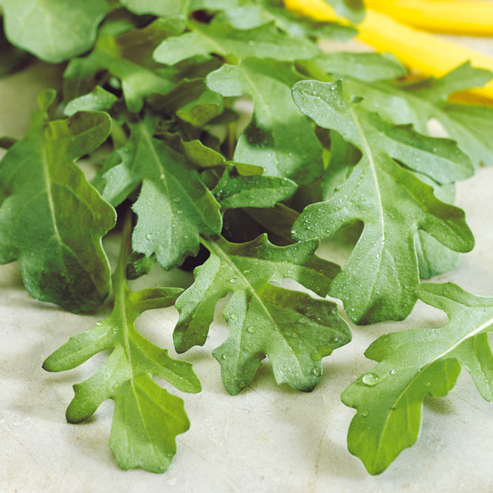 Herb Plant - Rocket