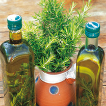 Herb Plant - Rosemary