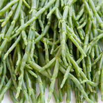 Samphire Seeds