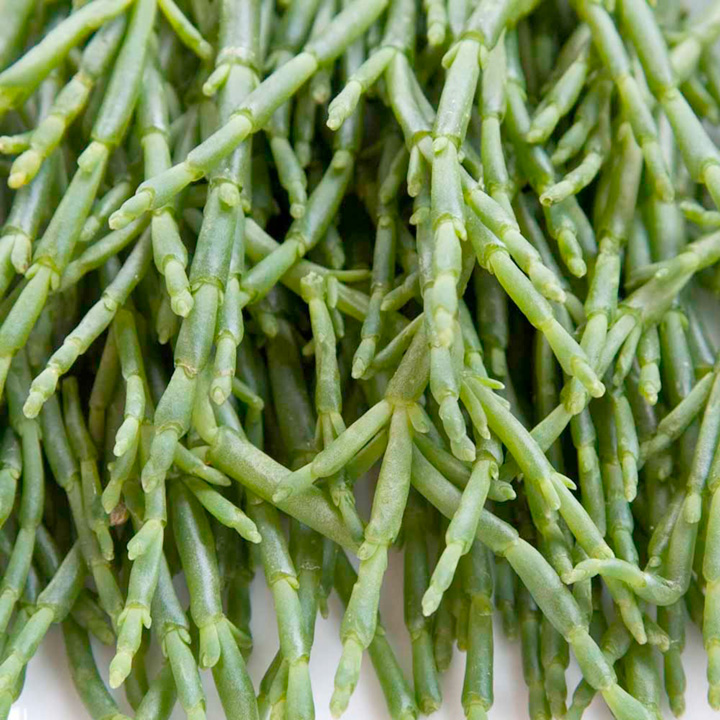 Samphire Seeds