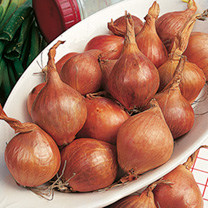 Heavy crops of round bulbs with reddish-yellow skin. Good resistance to downy mildew. Stores well.
