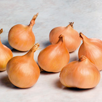 Onion, Garlic & Shallot Bulbs - Collection