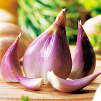 Shallot Bulbs - Lucky Dip
