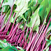 A versatile, easy-to-grow spinach boasting attractive and sweet-tasting red-veined and red-stemmed leaves.