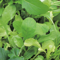 Leaf Salad Seeds - French Mix