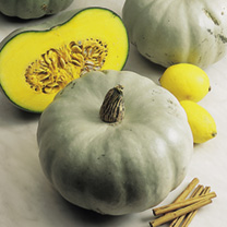 Ask any allotment veteran their idea of the best-flavoured winter squash and you can pretty much guarantee this one will come out top of their list. A