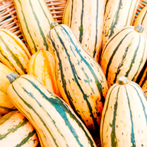 Squash Plants - Honey Boat