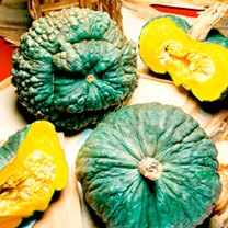 The heirloom sea pumpkin of Chioggia on the coast of Italy. The large turban shaped fruit are deep blue-green one of the most beautiful and unique of