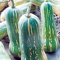 Squash Butternut Seeds - Green & Brown