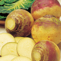 Bred for extra sweetness, Ruby has dark purple-skinned globe shaped roots with creamy yellow flesh and is a really useful winter vegetable. A high dry