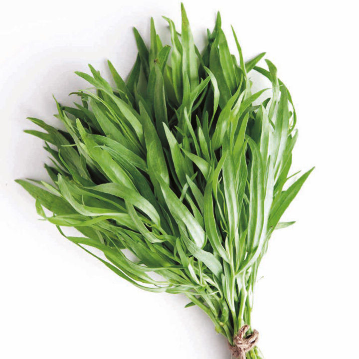 Herb Plant - French Tarragon