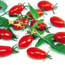 Tomato Floridity Seeds