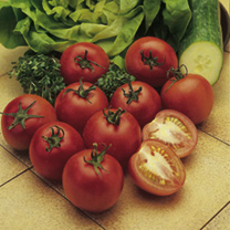 Tomato Alicante Seeds