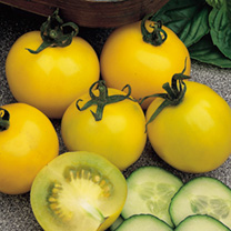 Tomato Golden Sunrise Seeds
