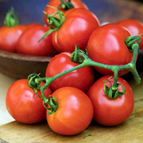 Tomato Seeds - Summer Frolic