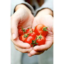 Tomato Seeds - Twin Pack Gardeners Delight/Tangerine