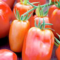 Tomato Seeds - Twin Pack Ildi/San Marzano