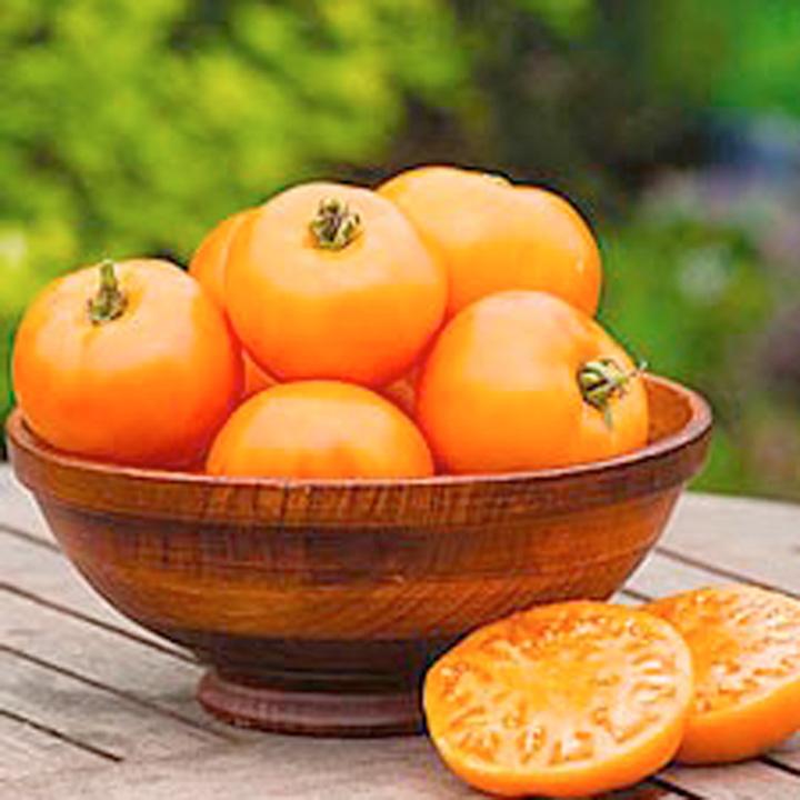 Tomato Plants - Tangerine