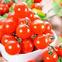 Grafted Tomato Plant - F1 Crimson Cherry