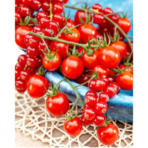 Tomato Grafted Plants - Tutti Frutti Red Berry