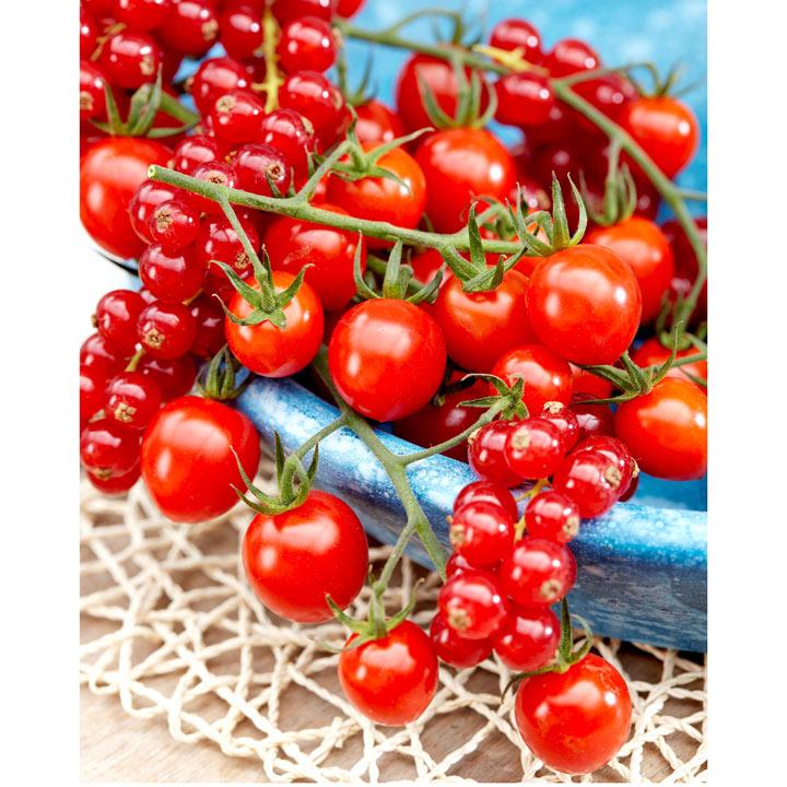 Tomato Grafted Plant - Tutti Frutti Red Berry