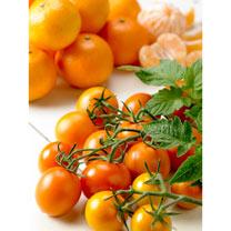 Tomato Grafted Plants - Tutti Frutti Mandarin
