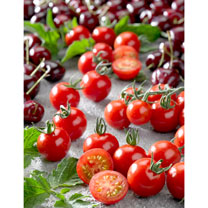Tomato Grafted Plants - Tutti Frutti F1 Cherry