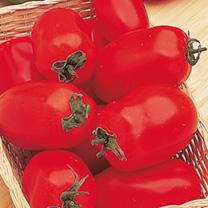 Tomato F1 Incas Seeds