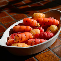 New Zealand Yam Plants - Oca