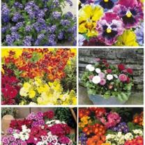 Value Autumn Plant Offer