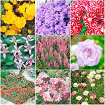 Alpine Garden Collection