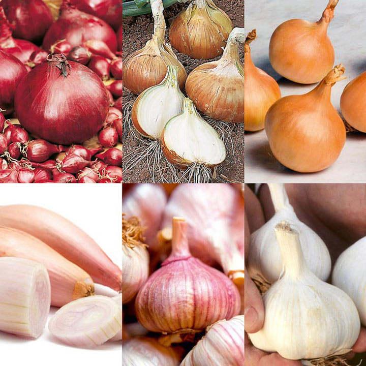 Bumper Autumn Planting Onion/Garlic/Shallot Collection ...