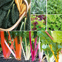 Winter Veg Collection Plants - Twin Pack