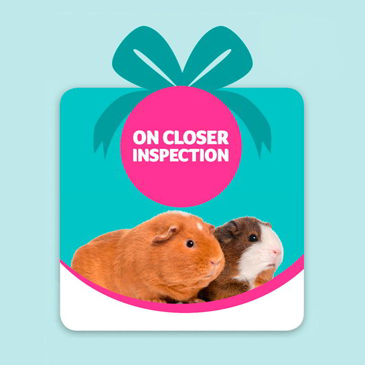 Pet Saving Gift - On Closer Inspection