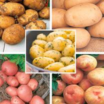 Garden Potato Collection